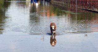 La Euroliga dona 30.000 euros a las víctimas de las inundaciones