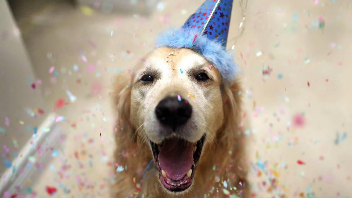 Basta de mentiras: Conocé la edad exacta de tu perro