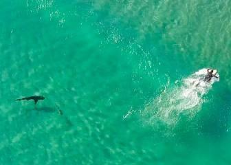 Asombrosas imágenes aéreas de surfistas y tiburones... juntos