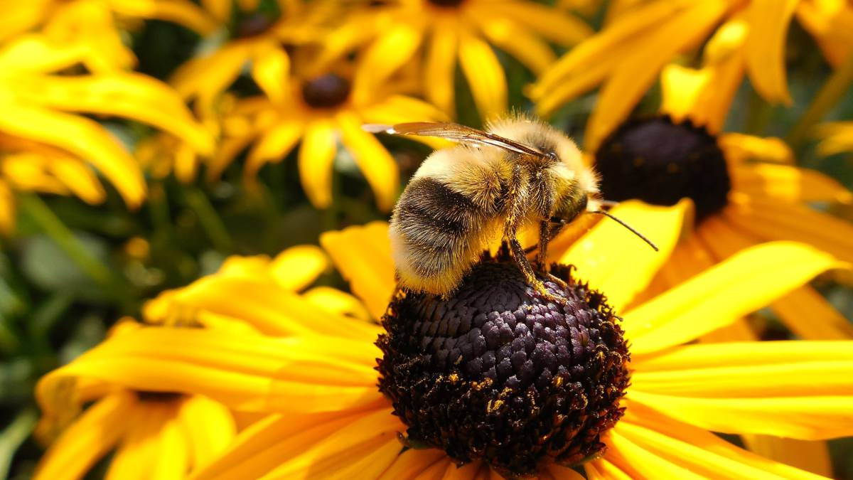 Qué hay que hacer si nos pica una abeja o una avispa? - AS.com