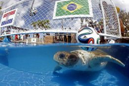 Big Head the Turtle predicts Brazil will beat Croatia