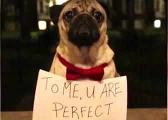 Tus películas navideñas favoritas protagonizadas por pugs