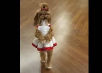 Este perro caminando sobre dos piernas es tierno y espeluznante a la vez