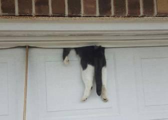 7 pruebas de que los gatos tienen realmente 7 vidas