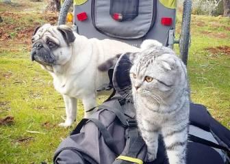 Este perro y este gato han hecho el Camino de Santiago juntos y sin pelearse