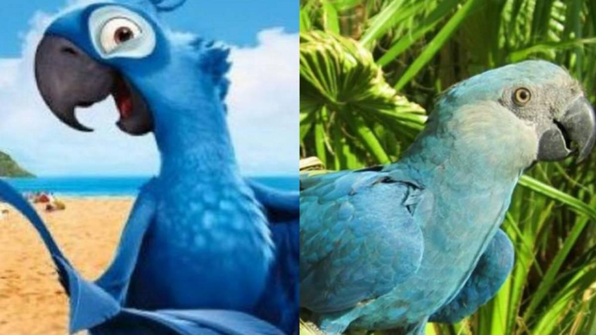 Confirman extinción del guacamayo azul (como el de la película