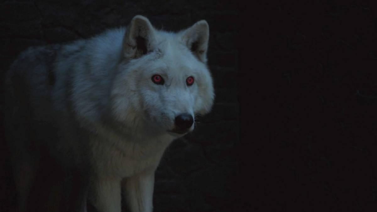 Game of Thrones: Ghost podría regresar en la temporada 8