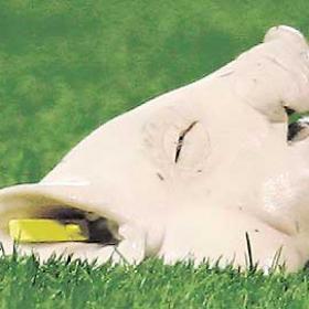 Un cochinillo fue lanzado a la portería de Casillas