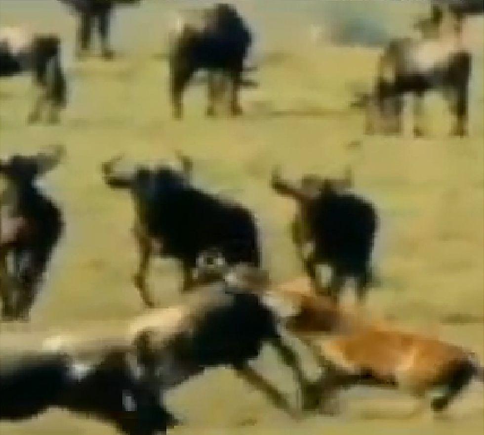 El Madrid demandará a TV3 por comparar a su equipo con hienas