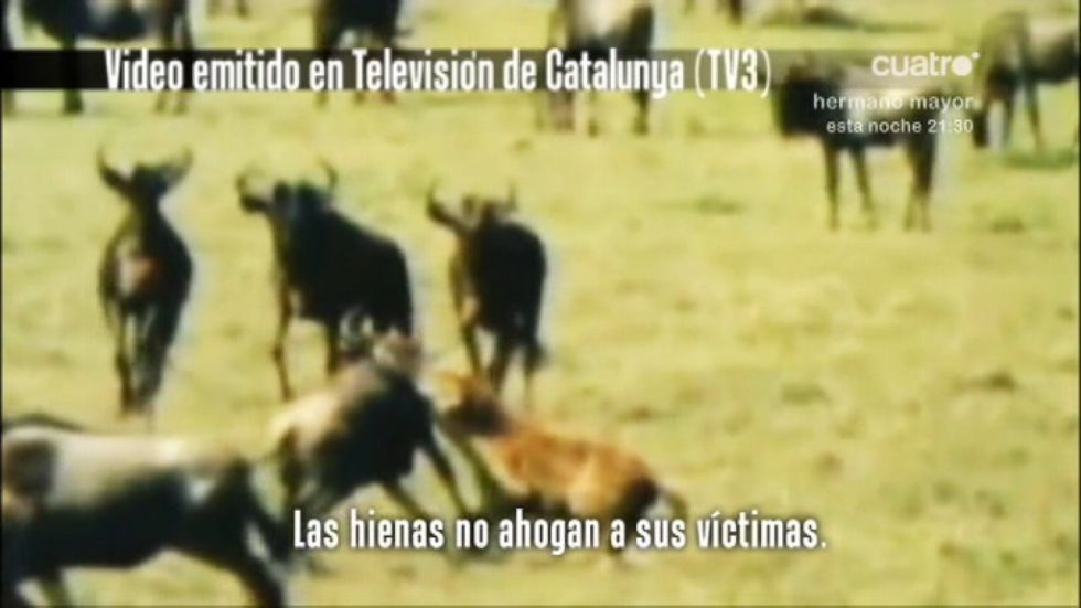 El Madrid pide seis millones a TV3 por el vídeo de la hienas