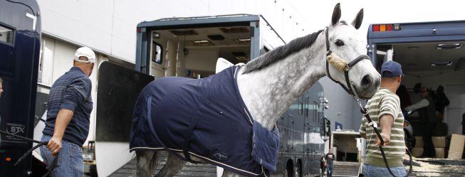 El Horse Week llena de caballos tres pabellones del IFEMA