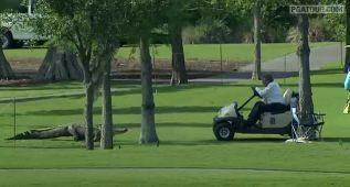 Un golfista muere atacado por un cocodrilo en Sudáfrica