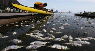 Retiradas 32 toneladas de peces muertos en las sedes olímpicas