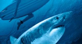 ¿Por qué los tiburones atacan más a los surfistas?