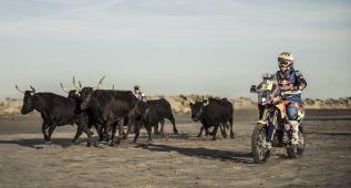 Los toros de Camarga también participan en el Dakar 2015