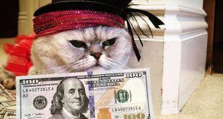 Cashcats: si te gustan los gatos y el dinero, este es tu sitio