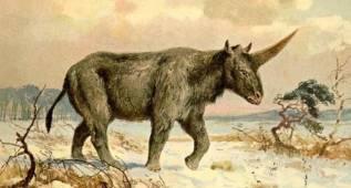 Unicornios y humanos coexistieron hace 29.000 años