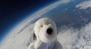 ¿Pero qué hace un perro de peluche en el espacio?