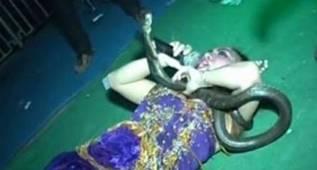 Muere Irma Bule tras el ataque de una cobra en directo