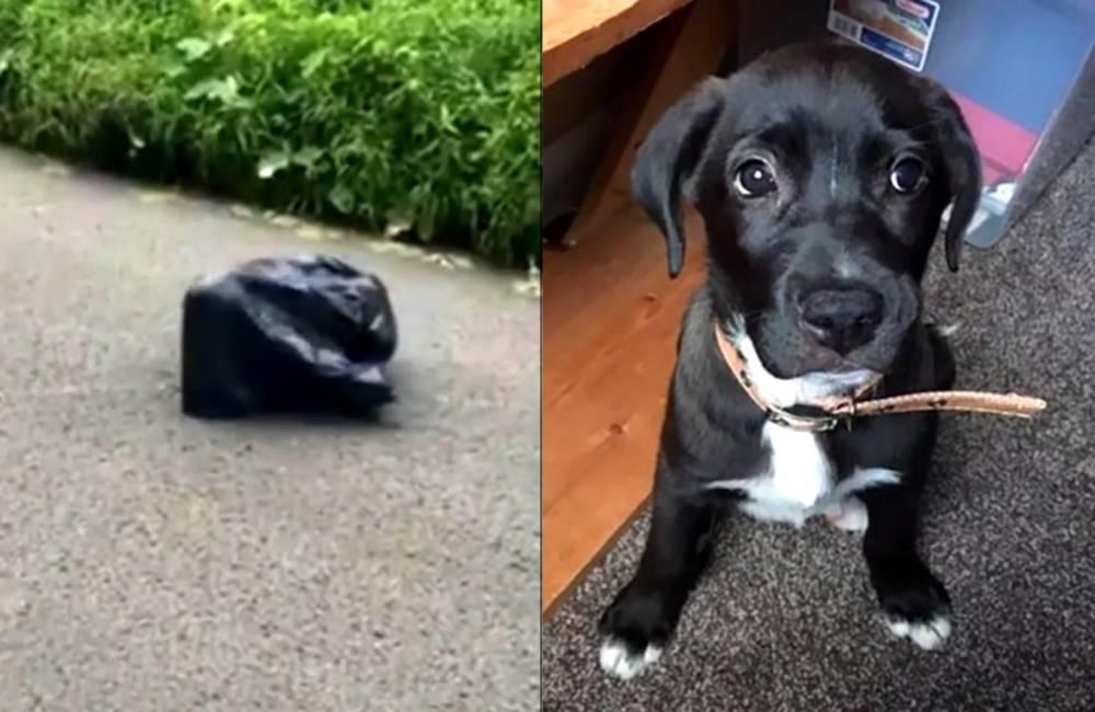 Vídeo: Rescatan a un perro abandonado en una bolsa de basura - AS.com