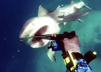 Un buceador sobrevive al impactante ataque de un tiburón