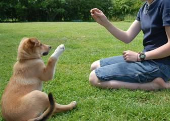 ¿Cómo debes hablar a tu perro? La ciencia responde