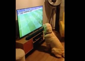 El perro trending topic por seguir así la Eurocopa