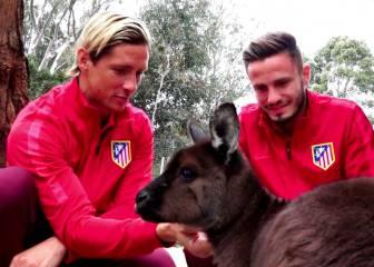 Fernando Torres y Saúl, entre canguros y koalas