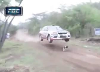 Un perro se cruza en medio de un rally... ¡y sobrevive!