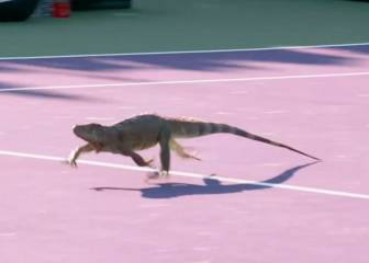 Iguana stops play in Miami Open first-round match