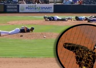 Bee-ware! Flying pitch invaders cause buzz in baseball match