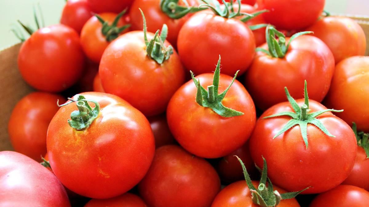 Resultado de imagen para tomate