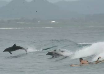 Espectacular video de delfines surfeando en playas de Oceanía
