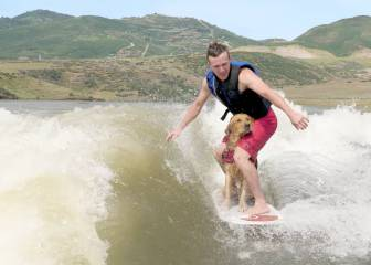 A este adorable Golden Retriever le va el wakesurf