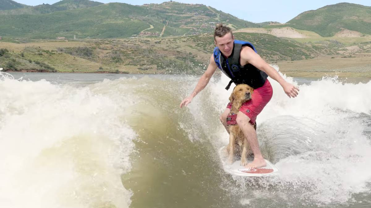 Kicker, un Golden Retriever practicando wakesurf