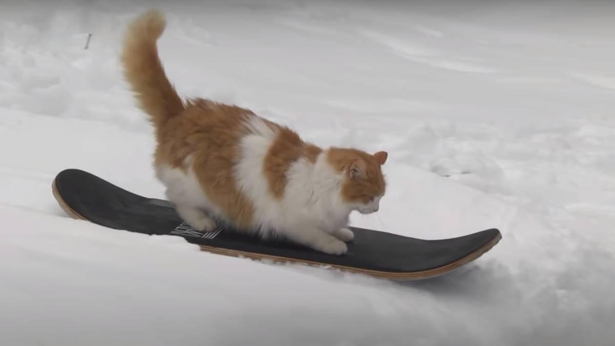 коты сноубордисты фото же, фильмографии актрисы