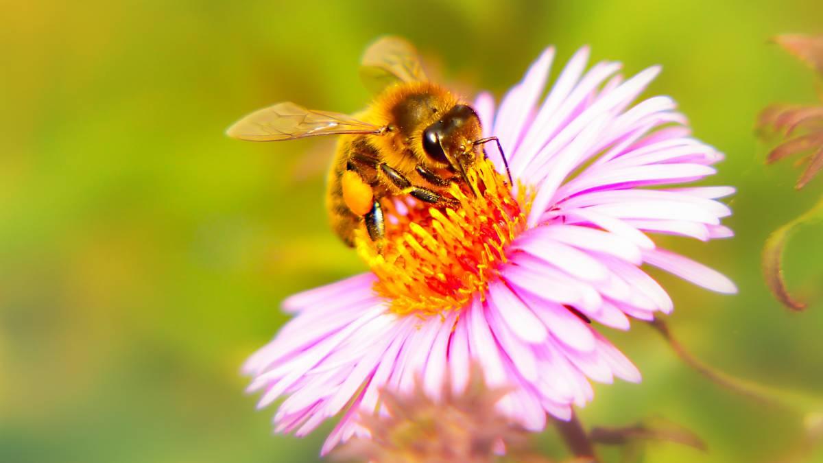abejas, medio ambiente, cambio climático, alimentos, miel