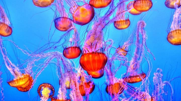 que hacer frente a una picadura de medusa