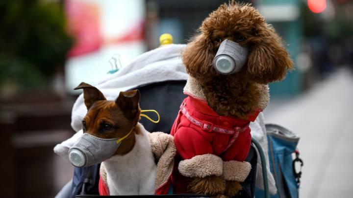 Coronavirus y mascotas: ¿debo preocuparme por un posible contagio ...