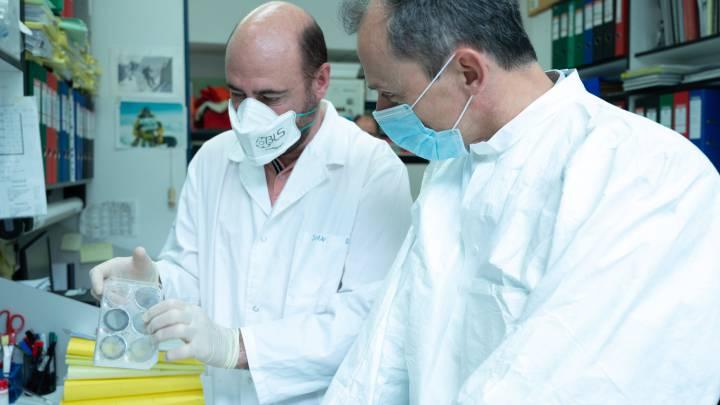 MVA-COVID-19: así es la primera vacuna del CSIC con posibilidades ...
