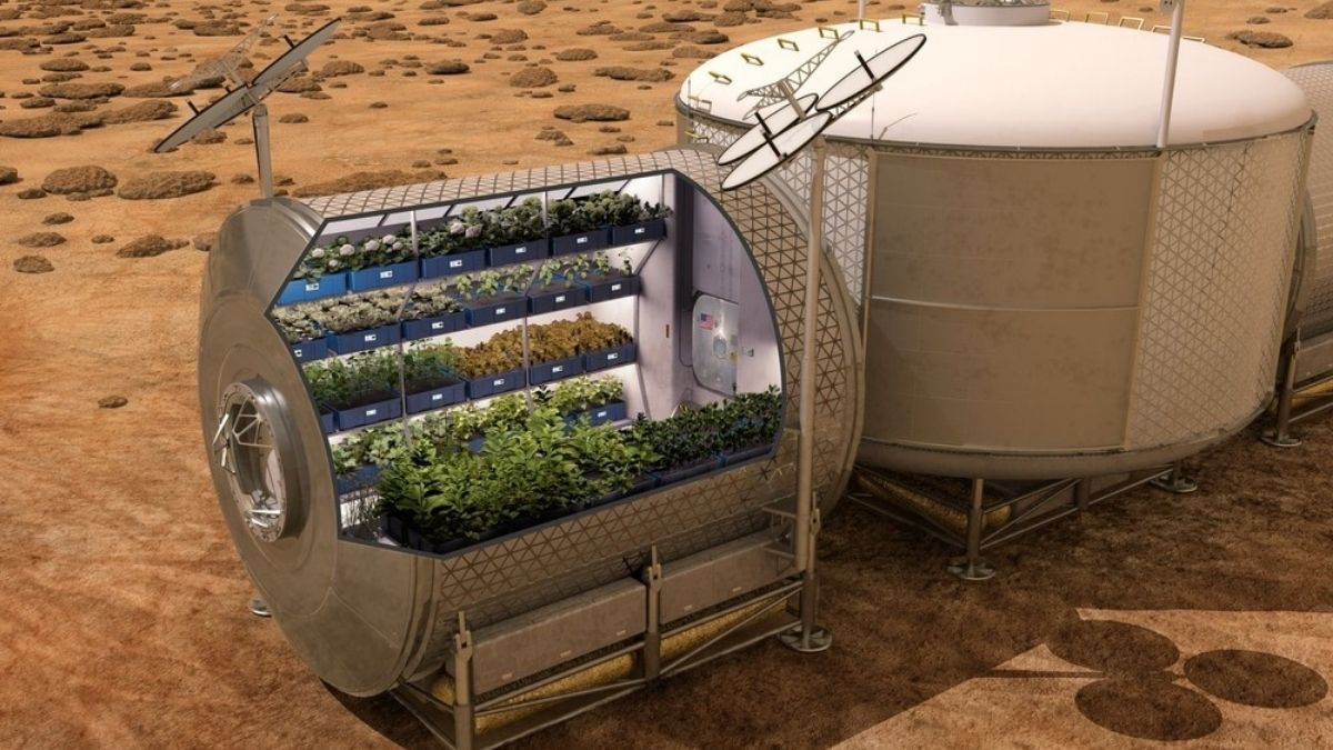 NASA awards the best idea to grow potatoes in space
