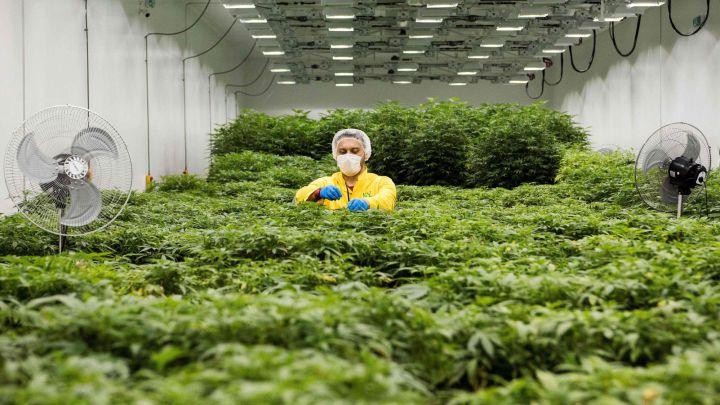 Nueva York dice sí a la marihuana