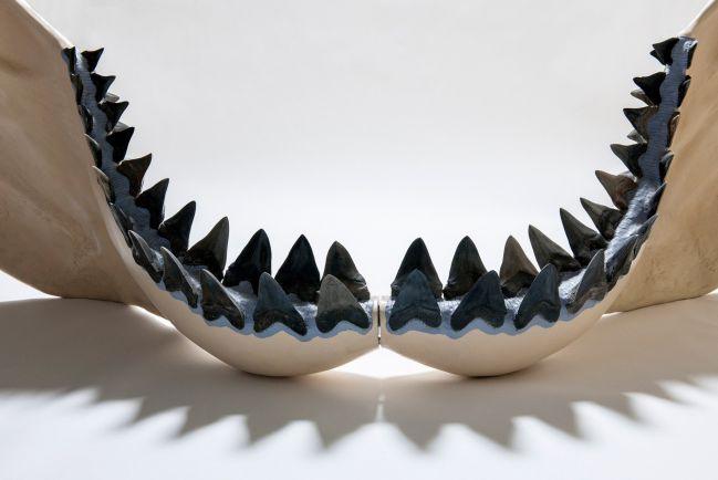 El Megalodón pudo medir hasta 20 metros, según nuevos cálculos dentales
