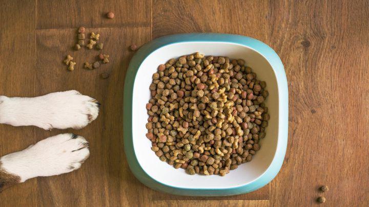 Alertan de bacterias resistentes a antibióticos en marcas de comida para perros