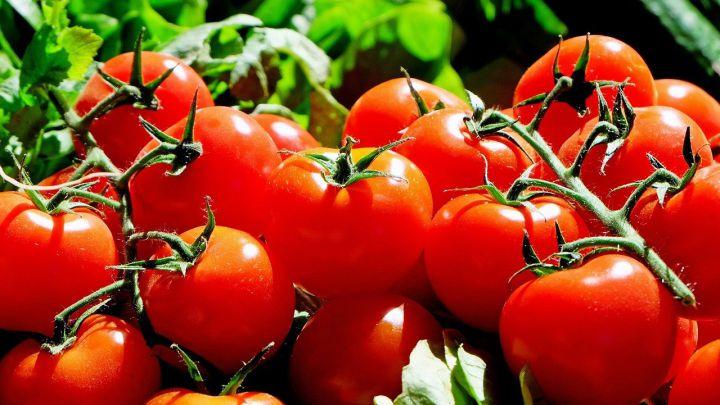 El sistema de defensa de los tomates - AS.com