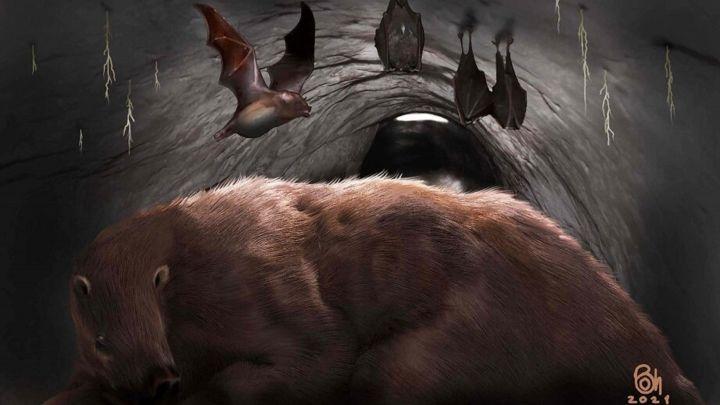 """Encuentran restos de """"un verdadero vampiro gigante"""" extinto hace 100.000 años"""