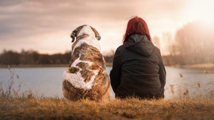 Las razones por las que los perros son tan fieles a los humanos según la ciencia