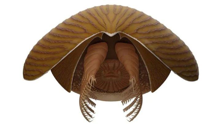 Descubren el fósil de un monstruoso depredador de los mares del Cámbrico