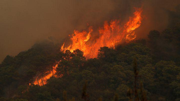 Muere un bombero en el incendio forestal de Sierra Bermeja - AS.com