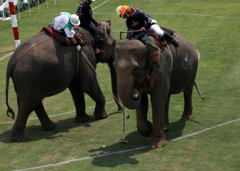 King's Cup elephant polo kicks off in Bangkok